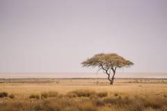 Одиночное дерево Африка Стоковые Фото
