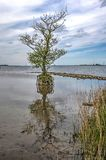 Одиночное дерево все еще стоя стоковые фотографии rf