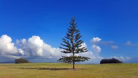Одиночное дерево в парке стоковое фото rf