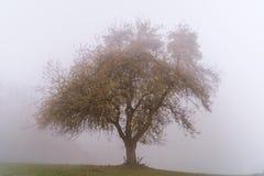 Одиночное дерево в тумане осени стоковая фотография rf