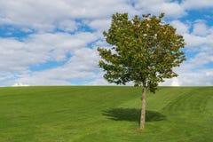 Одиночное дерево на зеленом горном склоне стоковые фотографии rf