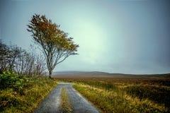 Одиночное дерево на туманный день осени стоковая фотография
