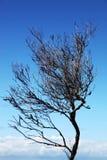 Одиночное дерево силуэта против ясного голубого неба Стоковые Фотографии RF