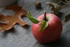 Одиночное органическое яблоко с листьями над предпосылкой падения тематической Стоковое Изображение
