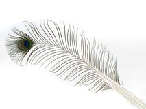 Одиночное перо павлина изолированное на белой предпосылке стоковые изображения