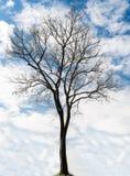 Одиночное старое и мертвое дерево стоковые фотографии rf