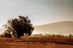 Одиночное хранят дерево пасьянса в, который Стоковое Изображение RF