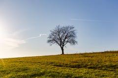 Одиночное siluette дерева на поле травы против голубого неба Стоковые Изображения RF