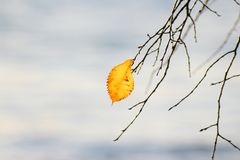 Одиночные желтые листья Стоковые Фотографии RF