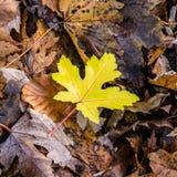 Одиночные листья Стоковое Фото