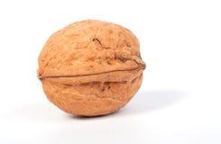 одиночный грецкий орех Стоковое фото RF