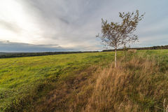 Один вал на поле осени вкосую Стоковое Фото