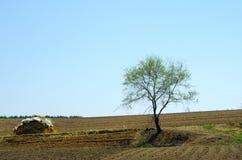 один вяз в поле стоковое фото rf