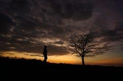 Один дерево и заход солнца Стоковая Фотография