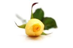 один желтый цвет розы Стоковое Фото