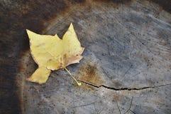 один желтый цвет Стоковые Изображения