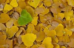 Один зеленый листь Стоковое Изображение
