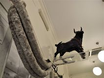 Один из самого лучшего магазина мясников в Риме стоковые изображения rf