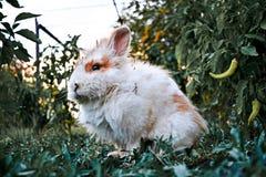 Один коричневый кролик младенца в саде стоковое фото