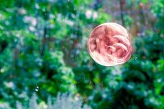 Один коричневый пузырь мыла Стоковая Фотография