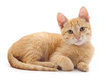 Один красивый кот Стоковые Фото