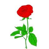 Один красный Rose в типе нарисованном рукой Стоковое Фото