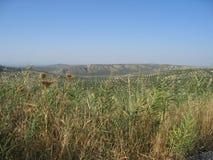 Один летний день в Martos Стоковая Фотография RF