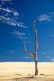 один мертвый вал песка Стоковое Изображение RF
