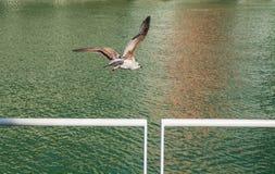 Один плавать чайки стоковое изображение rf