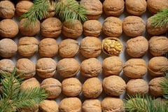 Один раскрытый грецкий орех среди грецких орехов строк стоковое изображение rf