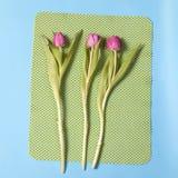 Один розовый тюльпан аранжировал на голубой и зеленой предпосылке Валентайн приветствию s дня карточки Стоковая Фотография RF