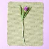 Один розовый тюльпан аранжировал на зеленой и розовой предпосылке Валентайн приветствию s дня карточки Стоковые Изображения RF