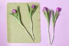 Один розовый тюльпан аранжировал на зеленой и розовой предпосылке Валентайн приветствию s дня карточки Стоковые Изображения
