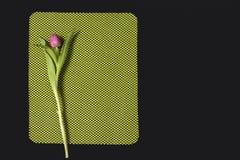 Один розовый тюльпан аранжировал на зеленой и черной предпосылке Валентайн приветствию s дня карточки Стоковые Изображения RF