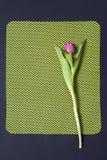 Один розовый тюльпан аранжировал на зеленой и черной предпосылке Валентайн приветствию s дня карточки Стоковая Фотография