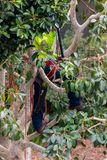 Один триммер дерева в дереве стоковые изображения
