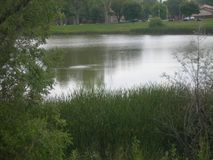 Один уединённый Critter в озере сегодня стоковые фотографии rf