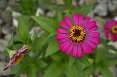Один фиолетовый цветок в тропиках стоковые изображения