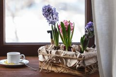 Один чашка кофе или чай утра Стоковые Изображения