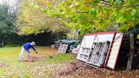 Один человек времени midle собирает упаденные листья видеоматериал