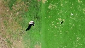Один человек играет гольф на зеленом поле, ударяя шарик сток-видео