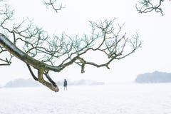 Один человек идя в тяжелый снежный день стоковая фотография rf