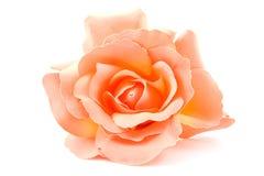 один шелк померанца розовый Стоковая Фотография RF
