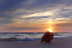 Один seashell морем Красочный вечер лета Стоковое Фото