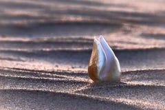 Один seashell на дюнах Стоковая Фотография