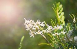Одичалая белизна орхидеи стоковые фото