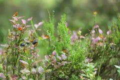 Одичалая голубика в лесе лета Стоковое Изображение RF