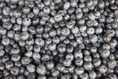 Одичалая деталь плодоовощей blackberrys еда предпосылки здоровая Стоковая Фотография RF