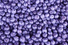 Одичалая деталь плодоовощей blackberrys еда предпосылки здоровая Стоковое фото RF