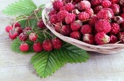 Одичалая клубника луга Зрелые и душистые ягоды в лете стоковые фотографии rf